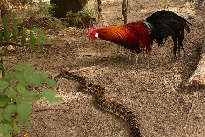 Rattlesnake basics - Along the Way